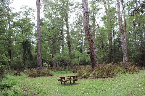 Cabbage Tree Creek picnic area